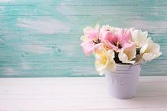 新春天白色和桃红色郁金香和水仙在白色大型装配架 免版税库存照片