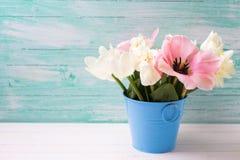 新春天白色水仙和桃红色郁金香在桶在whi 库存图片