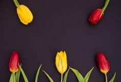 新春天红色和黄色郁金香开花在黑背景顶视图的特写镜头宏指令与拷贝空间 库存照片