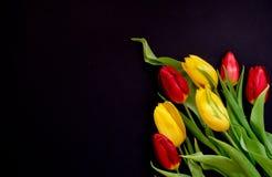 新春天红色和黄色郁金香花束开花在右下角的特写镜头宏指令在黑背景顶视图 库存图片