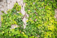 新春天绿草和叶子植物木篱芭的 免版税图库摄影
