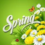新春天背景用蒲公英和 库存图片