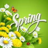 新春天背景用蒲公英和 免版税库存图片