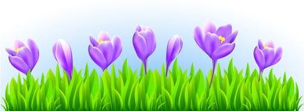 新春天花边界 向量例证