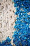 新春天蓝色草和叶子植物木篱芭的 库存照片