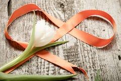 新春天郁金香关闭与在老灰色woode的橙色丝带 库存图片