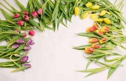 新春天,复活节花 库存图片