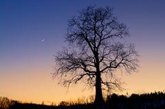 新月形月亮概要结构树 图库摄影