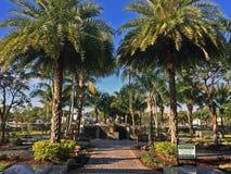 新月形面包公园坟场棕榈树在佛罗里达 免版税库存照片
