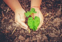 新有同情心的寿命 浇灌的年幼植物 儿童` s手 库存图片