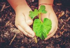 新有同情心的寿命 浇灌的年幼植物 儿童` s手 免版税库存图片