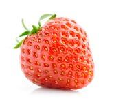 新查出的红色唯一草莓白色 免版税库存图片
