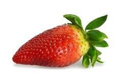 新查出的草莓白色 免版税库存照片