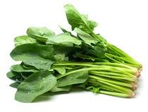 新查出的菠菜白色 库存图片