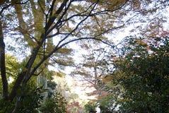 新森林早晨 库存照片