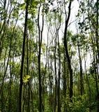 新森林 免版税库存照片