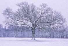 新泽西冬天奇迹 库存照片