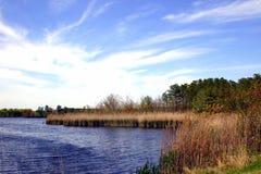 新泽西的沼泽 免版税库存图片