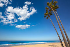 新港海滨加利福尼亚在岸的棕榈树 库存照片