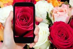 新湿红色玫瑰关闭的旅游照片 免版税库存照片
