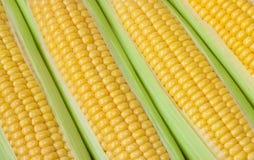 新玉米棒子背景 免版税库存照片
