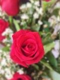 新玫瑰色背景花束  日s华伦泰 库存图片
