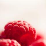 新甜莓关闭 图库摄影