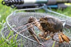 新生活癌症在鱼网爬行在钓鱼竿附近 免版税库存照片