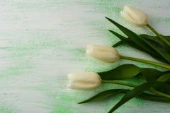 新白色和紫色郁金香背景 免版税库存图片