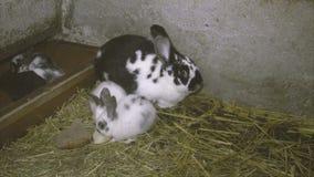 新的兔子 股票录像