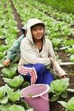 新的农场女孩 图库摄影