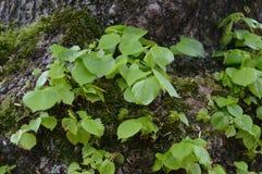 新的分支增长在树外面 库存图片