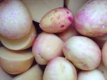 新的土豆 免版税库存照片