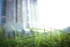 新的大厦的照片在背景中在那里前景被弄脏,是一片美丽的草叶与mornin下落的  免版税库存图片