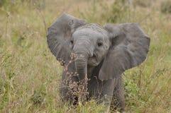 新的大象 免版税库存照片