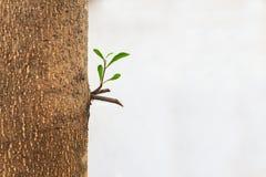 新的射击和新鲜的绿色叶子在成人树 免版税库存图片