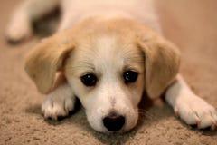 新的小狗 免版税库存照片