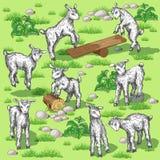 新的山羊 免版税库存照片