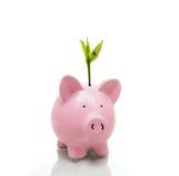 新的成长 免版税库存照片