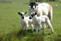 新的春天家庭 免版税库存图片