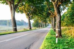 新的柏油路在森林里 免版税图库摄影