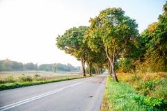 新的柏油路在森林里 库存照片