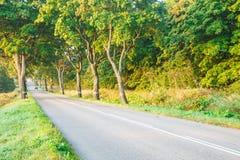 新的柏油路在森林里 库存图片