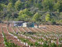 新的柑橘果树园,阿尔卡纳尔,卡塔龙尼亚 免版税库存图片