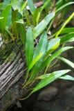 新的树成长在死的树桩树 免版税库存图片