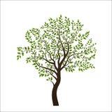 新的树 库存图片