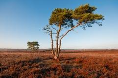 新的森林。 免版税库存照片