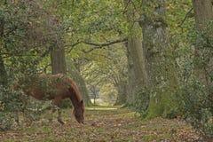 新的森林在秋天 库存照片