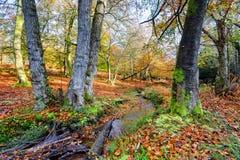 新的森林小河在秋天 库存图片