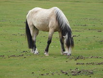 新的森林小马 免版税库存照片